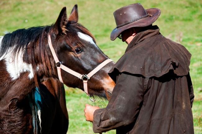 Elitox in horses