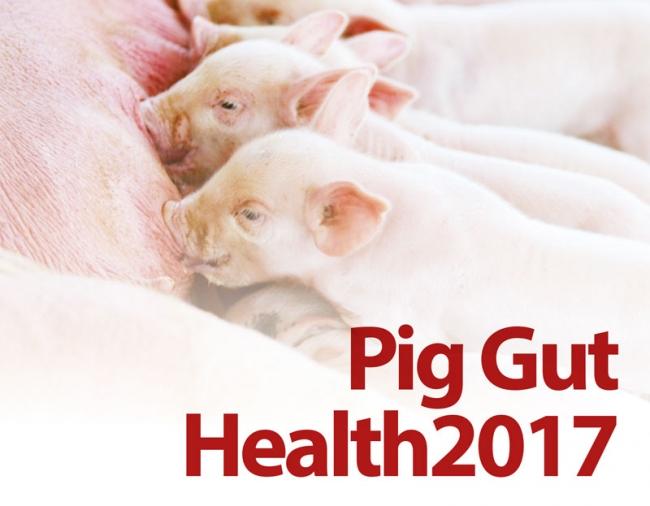 Pig Gut Health